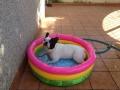 Paco en la pisci