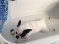 Paco tomando un baño relajante