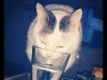 Cosme-gato-Amaia (3)