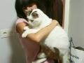 Cosme-gato-Amaia (5)