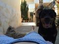 Dalila-la Rottweiler-3