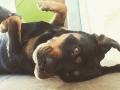 Dalila-la Rottweiler-5