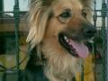 perro-sin-raza-1