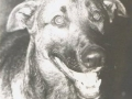 perro-sin-raza-12