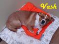 perro-sin-raza-4