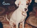 perro-sin-raza-6