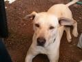 perro-sin-raza-7