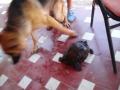 las-mascotas-de-Ester (1)