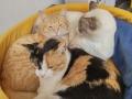 las-mascotas-de-Ester (13)