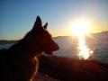 las-mascotas-de-Ester (3)