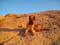 las-mascotas-de-Ester (4)