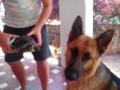 las-mascotas-de-Ester (8)