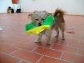 Luli-perra-Sara-7