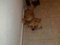 Luli-perra-Sara1