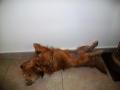 Luli-perra-Sara2