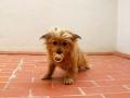 Luli-perra-Sara4