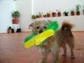 Luli-perra-Sara6