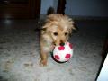 Luli-perra-Sara8