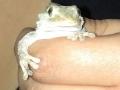 Mariana-gecko4