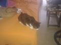 Maullidos, la gata de Arnau (2)