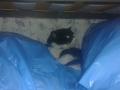 Maullidos, la gata de Arnau (6)