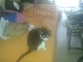 Maullidos, la gata de Arnau (7)
