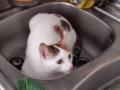 Miki en el fregadero