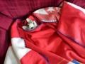 Miki en su manta del Atleti