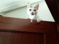 la gatita Miki subida en una puerta esperando su próxima victima
