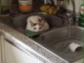 Miki en el fregadero parte II