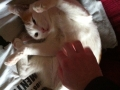 Miki recibiendo su masaje de uno de sus sirvientes