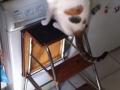 Miki cotilleando en la cocina