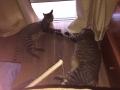 gatos-urien (1)