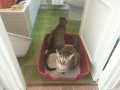 gatos-urien (2)
