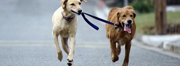 ¿Cómo enseñar a un perro a ser sociable?