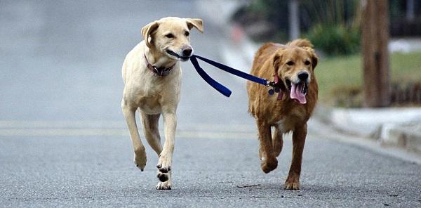 Enseñar a tu perro a ser sociable