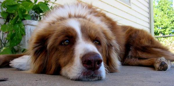 ¿Qué hacer con un perro ansioso o con trastornos de comportamiento?