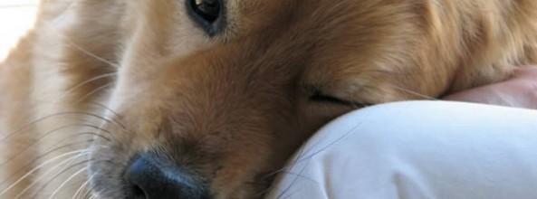Botulismo en los perros
