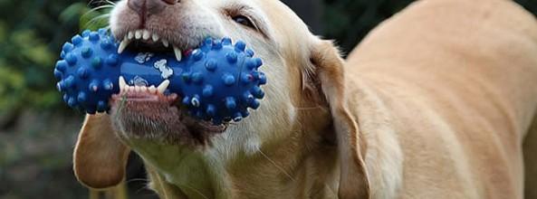 ¿Cómo escoger el juguete para perros ideal?