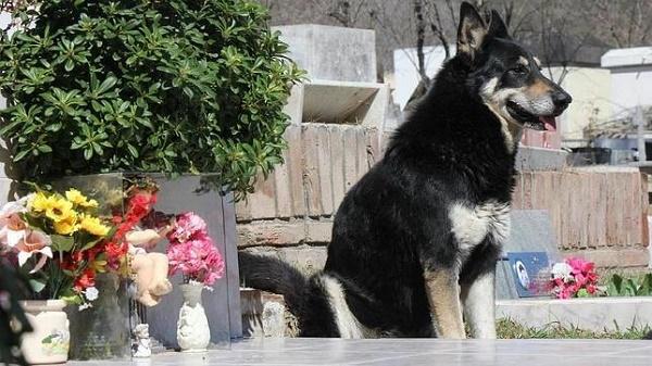 El perro y la muerte de un compañero