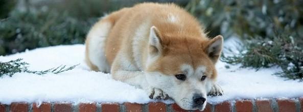 El perro y la muerte de su familia