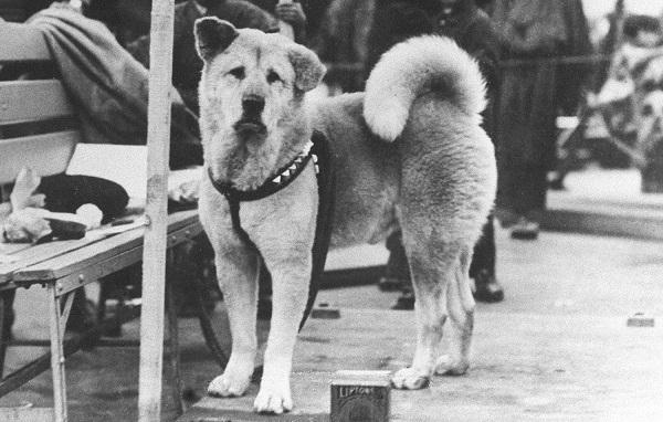 Los perros y la muerte de seres queridos