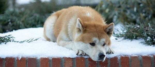 Los perros y la muerte de un ser querido
