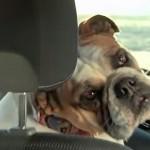 Vídeo de los mejores 10 anuncios de coches con perros protagonistas