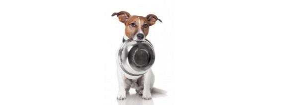 Por qué usar platos metálicos para alimentar a nuestros perros
