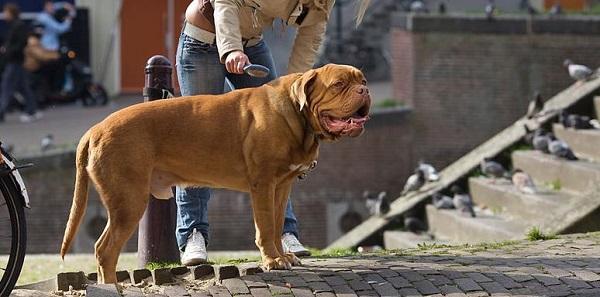 El cepillado de tu perro es más importante de lo que piensas