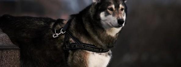 El origen del perro