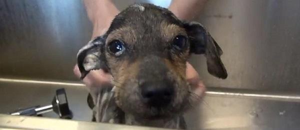 Vídeo de Jordan, un perro rescatado
