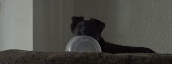 Pequeño perro Pastor Alemán no quiere compartir su agua