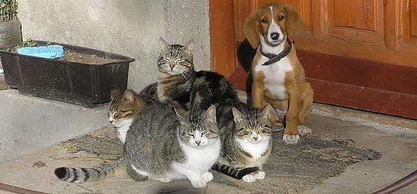 Relaciones entre perros y gatos